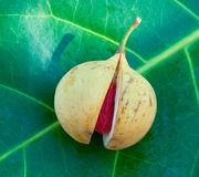 Close up image of nutmeg royalty free stock image