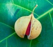 Close up image of nutmeg Royalty Free Stock Image