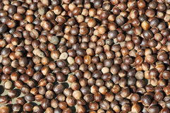 Close up image of nutmeg Stock Image