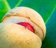 Close up image of nutmeg, very shallow focus Royalty Free Stock Image