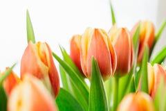 Close up image of orange tulips. Details of several orange tulips Stock Photo