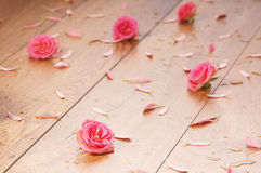 Close-up image of pink roses and petals on the floor Stock Photos