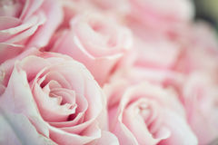 Close up image of pink roses. Wedding flower bouquet. Bridal bouquet Stock Image
