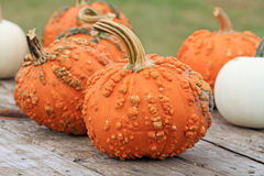 Pumpkins on the wooden table Stock Photography