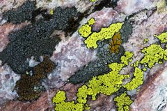 Close up of a rock and lichen. Close up image of a rock with colorful lichens stock photography