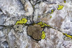 Close up of a rock and lichen. Close up image of a rock with colorful lichens stock image