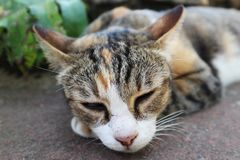 Close-Up Image Of A Sleeping Cat royalty free stock photography