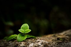 Close up image of small green plant growing on trunk in forest. stock photo