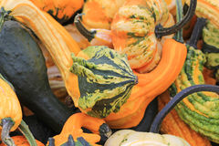 Colorful decorative pumpkins Royalty Free Stock Images