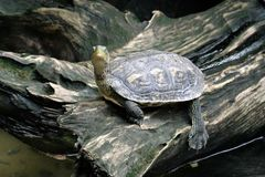 Close up image of small turtle. Look at the sky Stock Photo