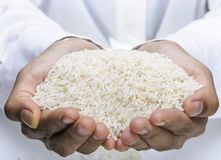 Close up image of thai jasmine rice on hand Royalty Free Stock Images