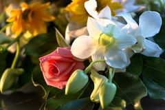 Beautiful White Orchids in A Bouquet royalty free stock photo