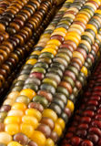 Close-up of Indian Corn Stock Photography