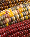 Close-up of Indian Corn Royalty Free Stock Photo