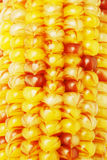 Close up of Indian corns Stock Image