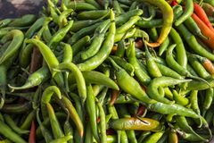 Close up of indian green chili pepper Royalty Free Stock Image