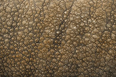 Close-up on Indian rhinoceros skin Stock Images