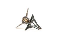 Close up inoperante da mosca Foto de Stock Royalty Free