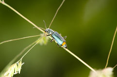 Close up of insect on plant Stock Photos