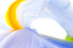 Close up of Iris petal Royalty Free Stock Photos