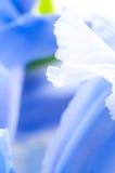 Close up of Iris petal Stock Photos