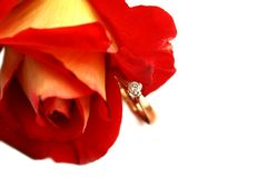 Close-up isolated red rose and diamond ring Stock Photos