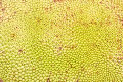 Close-up jack fruit Texture, background Royalty Free Stock Photos