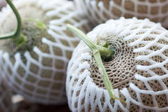 Close-up of Japanese Melon Royalty Free Stock Photo