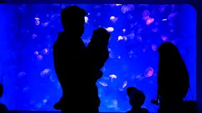 Close-up jellyfish, medusa in fish tank with neon light. Jellyfish is free-swimming marine coelenterate with a jellylike bell- or. Saucer-shaped body that is stock video