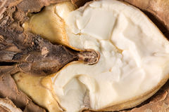 Close up jf walnut nucleus.  royalty free stock images