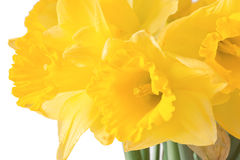 Close-up of jonquils Stock Photo