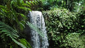 Close up of jungle fern plants in front of tropical waterfall stock video footage