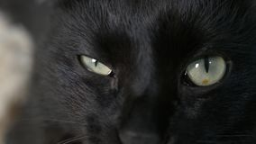 Close-up, 4k, green eyes of a black cat. stock video footage