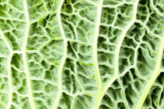 Close-up of a kale Stock Photography