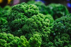 Close up on Kale. Green vegetable leaves, healthy eating, vegeta Royalty Free Stock Images