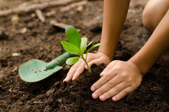 Close up Kid hand planting young tree Royalty Free Stock Photography