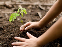 Close up Kid hand planting young tree Royalty Free Stock Photo
