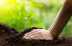 Close up Kid hand planting young tree Stock Photo