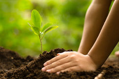 Close up Kid hand planting young tree Stock Images