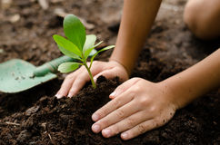 Close up Kid hand planting young tree stock image