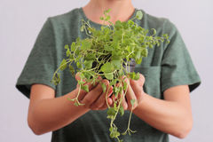 Close up of kid holding  plant . Ecology and environmental awareness. growing organic herbs for cooking at home Stock Photo