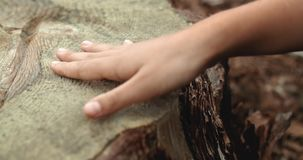 Cutted Tree Compassion. Close up kids hand touches cutted pine tree in the forest, compassion nature concept stock footage