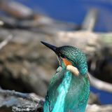 Close-up of kingfisher Royalty Free Stock Images