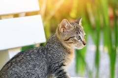 Close up kitten grey beautiful and  Light tone Yellow. Close up kitten grey beautiful and Light tone Yellow Stock Photography