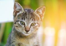 Close up kitten grey beautiful and  Light tone Yellow. Close up kitten grey beautiful and Light tone Yellow Stock Image