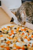Close up kitten sniffs the pizza royalty free stock photo