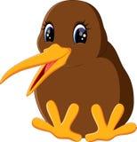 Close up kiwi bird Stock Images