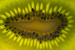 Close up of kiwi fruit Stock Images