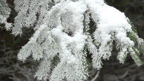 Close-up kleine nette boom na sneeuwval stock video