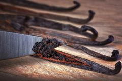 Close up of knife cutting vanilla beans seed pods. On wooden background stock photos